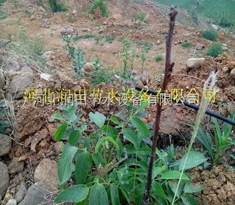 四川滴灌厂家直销果树滴灌施肥设备